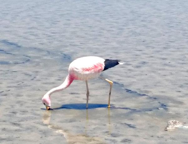 profisport karriere fernweh flamingo